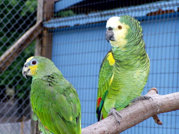 luchtreiniger kopen vogels
