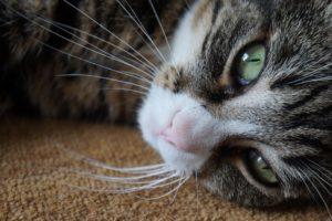 HEPA luchtreiniger kattenallergie